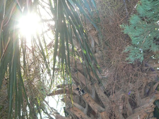 Blue Heron Inn - Amelia Island: Find the woodpecker