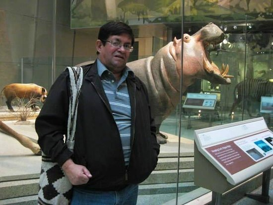 Museum Nasional Sejarah Alam Smithsonian: HIPOPOTAMO