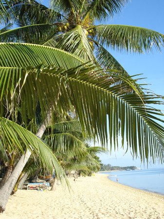 Maenam Resort: Strand, Blick vom Restaurant