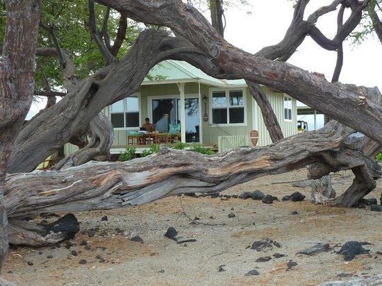 夜のライブ演奏 - Picture of Lava Lava Beach Club Cottages ...