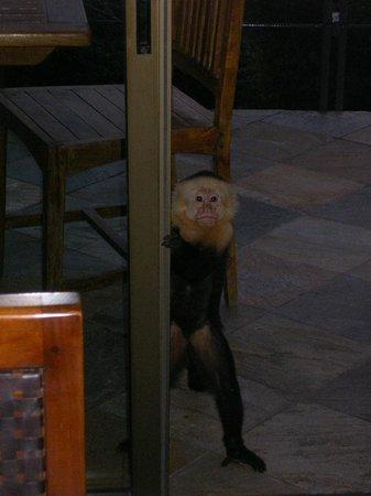 Villa Perezoso: curious monkey