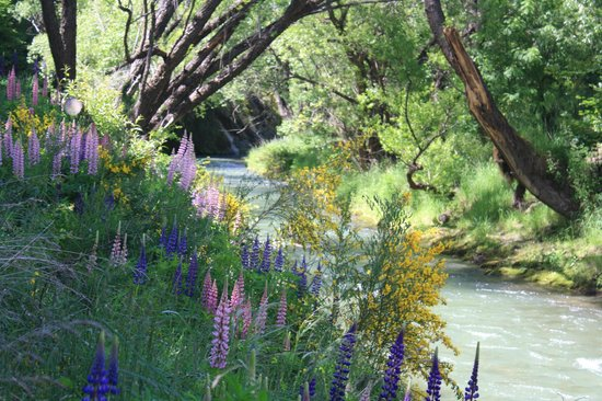 Queenstown Bike Tours: lupins in spring
