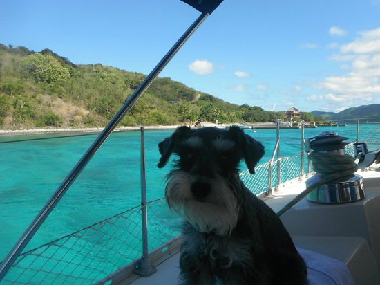 St. John Yacht Charters Survivan: Their dog Triton
