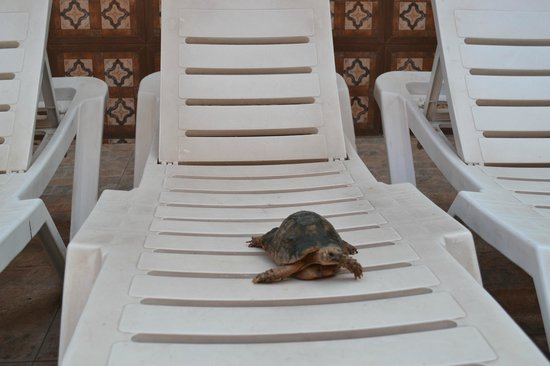 Diwane Hotel: tortoise relaxing with us