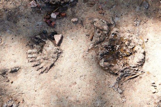 Junior Ranger Program: Fossils from Ranger Program