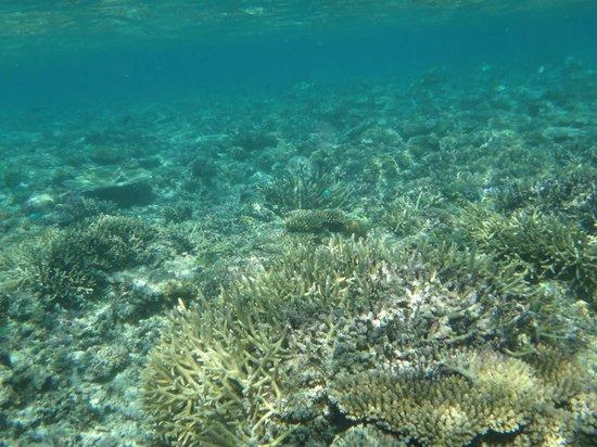 Qamea Resort And Spa Fiji照片