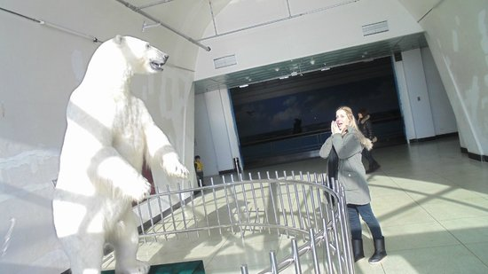 Dalian Natural History Museum: Polar Bear