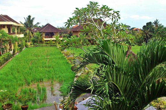 Sri Bungalows: Paddy fields at the back of the hotel