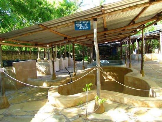 Watamu Turtle Watch: vasche per la cura delle tartarughe