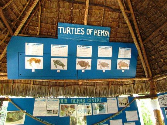Watamu Turtle Watch: tipi di tartarughe presenti in Kenya