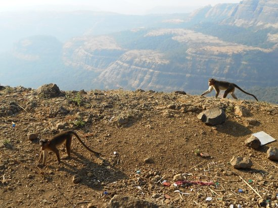 Lonavla, India: Waste going in Winter season...