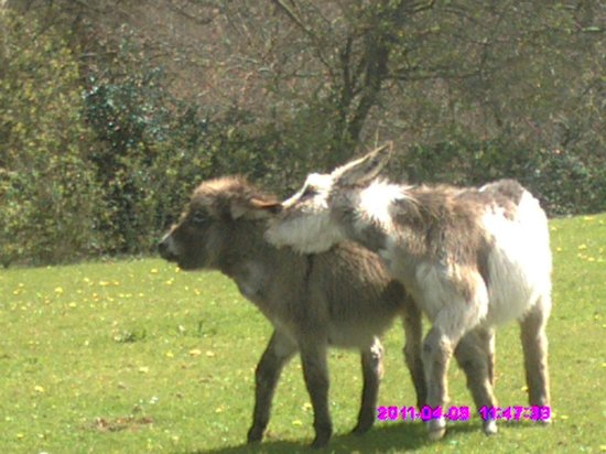 The Donkey Sanctuary: Two pals playing