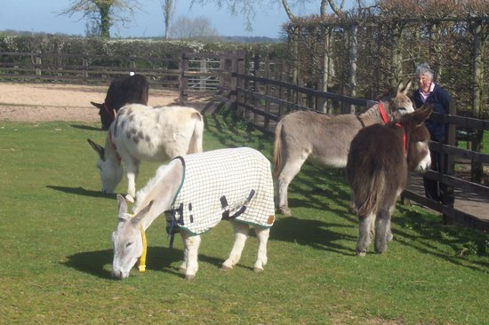 The Donkey Sanctuary: A little group