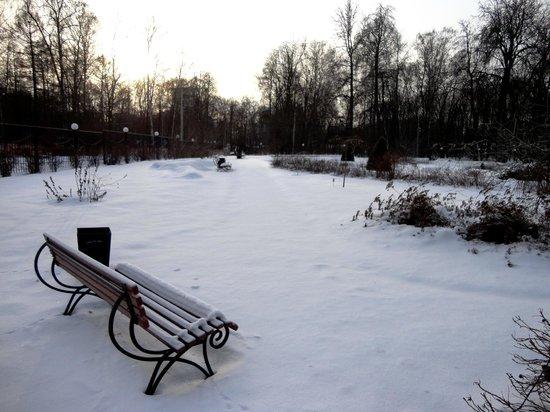 Sokolniki Park: Rose garden in the winter.