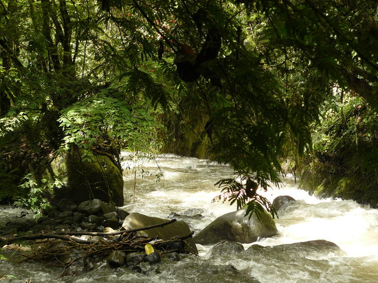 El Refugio de Intag Cloud Forest Lodge: Toabunche River
