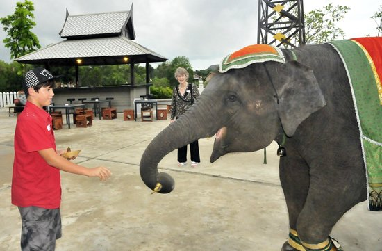Siam Niramit Phuket: Feeding the elephants