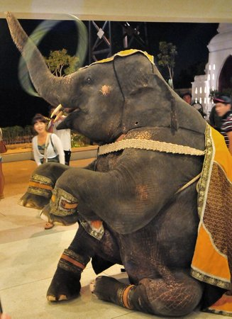 Siam Niramit Phuket: Elephant doing tricks