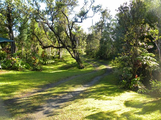 Volcano Fern Forest Retreat: The grounds #2