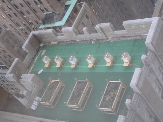 ذا تاورز أوف ذا والدورف أستوريا نيويورك: Festive Bee Hives On The Waldorf Roof As Seen From Our Suite