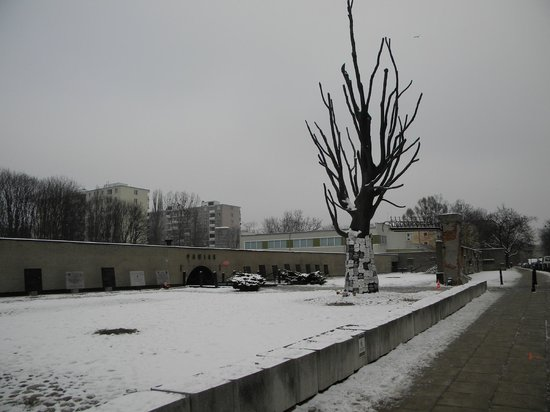 Pawiak Prison Museum: Pawiak Museum with the view of the famous elm tree, a silent witness of inhuman cruelty
