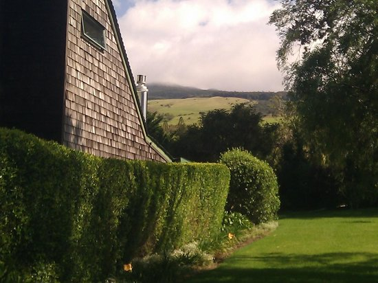 Waimea Gardens Cottage Bed and Breakfast : The landscape behind the house