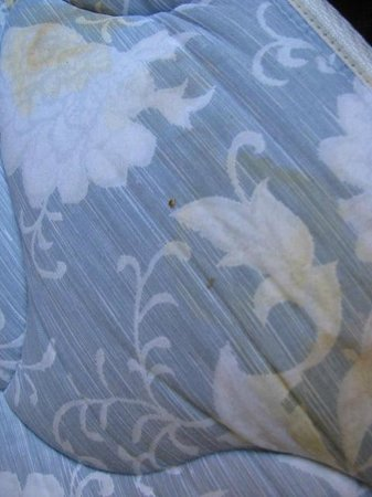 Extended Stay America - Providence - Airport : nasty mattress; bugs and blood stains