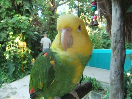 Hummer Jungle Tours: rescued parakeet
