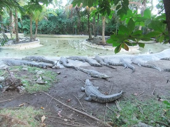 Hummer Jungle Tours: crocodile zoo