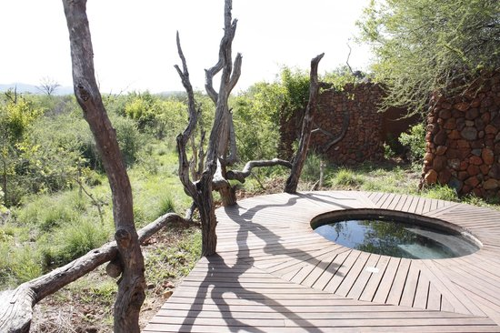 ‪‪Madikwe Safari Lodge‬: plunge pool‬