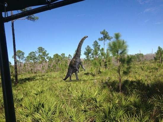 Captain Steve's Swamp Buggy Adventures: local wildlife (may not be real...)