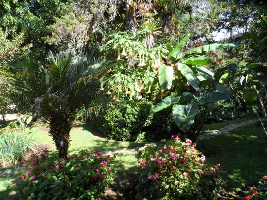 Boquete Garden Inn: The Garden