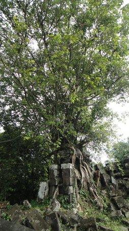 ruins of Chau Srei Vibol central complex