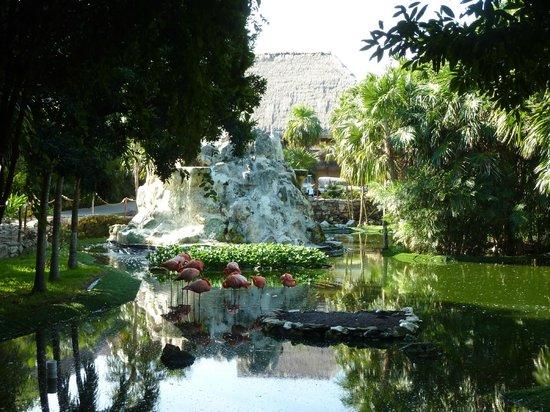 Grand Palladium Kantenah Resort & Spa: Parc à flamands roses