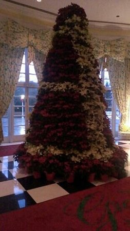 The Greenbrier: The Poinsettia Tree