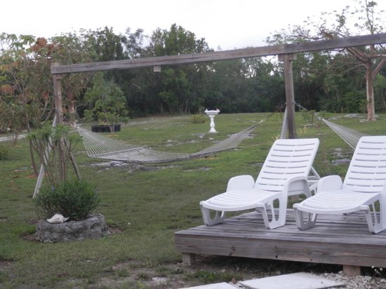 Tropical Dreams Rentals: Backyard