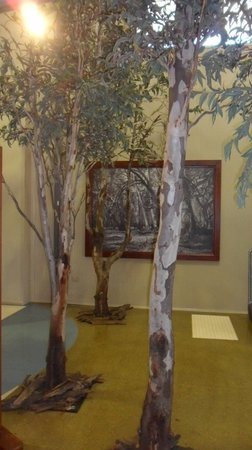 Gums tres in Barmah Forest Heritage and Education Centre