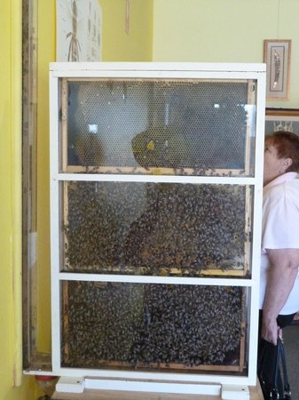 Kangaroo Island Gateway Visitor Information Centre: Working beehive at Island Beehive Kingscote