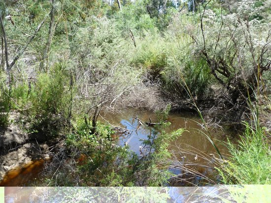 Kangaroo Island Gateway Visitor Information Centre : Platypus Waterholes - Flinders Chase National Park