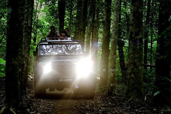 Bali 4wd Tour: inside Dasong jungle
