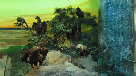 Dalian Natural History Museum: Birds of Prey 2