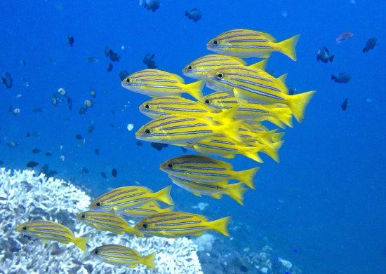 Villa Markisa: Marine life