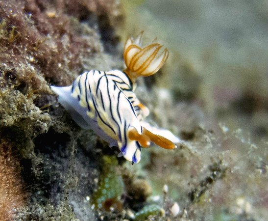 Villa Markisa Dive Resort: Marine life