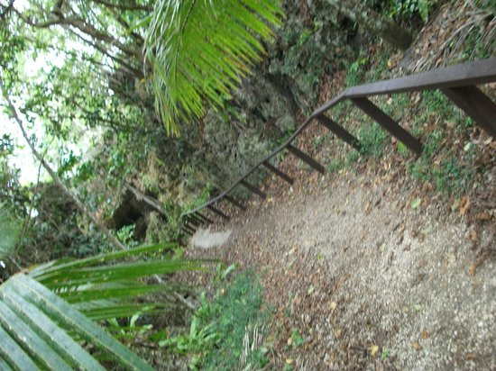 Avaiki Cave: Walk down to cave