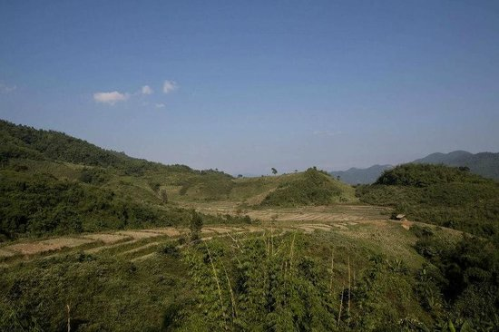 Bamboo Nest de Chiang Rai: Terrace field view from far