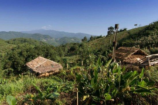 Bamboo Nest de Chiang Rai: Bamboo Nest