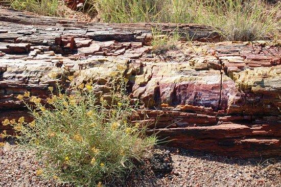 Long Logs Loop : Versteinerter Baumstamm
