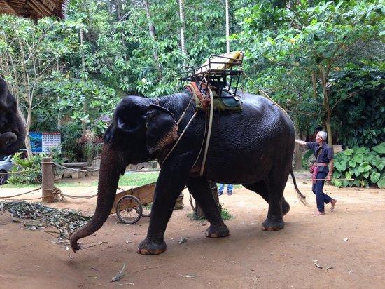 Kok Chang Safari Elephant Trekking 사진