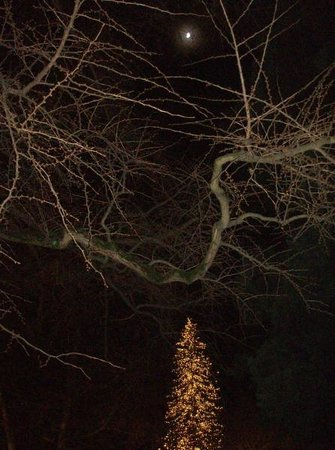Baur au Lac: Christmas tree and moonlight in hotel garden