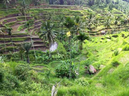 Bali Excursiones - Day Tours