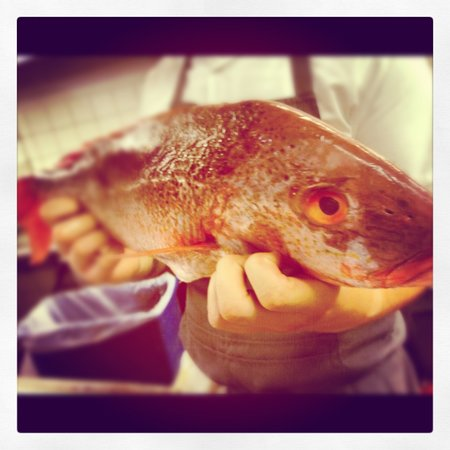 Carmelo's Restaurant: Silk snapper